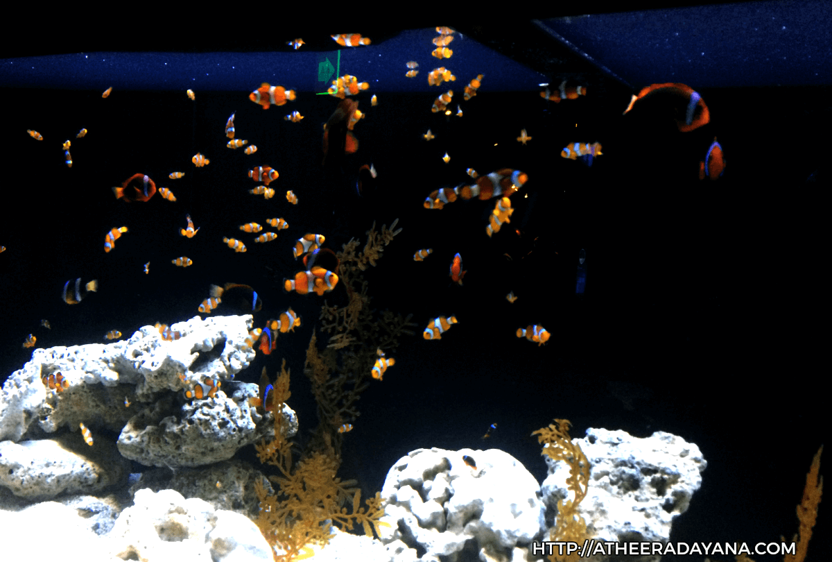 fishes-at-sea-life-aquarium
